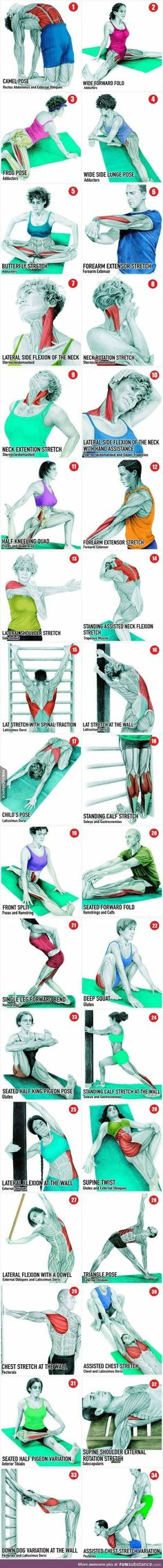 Which muscles get stretched?