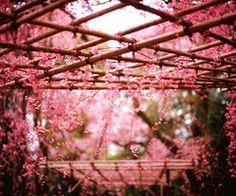 the flower girl | via Tumblr
