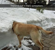Funny Dog With Head in Snow