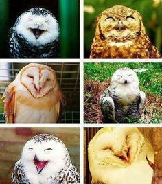 All smiles love owls!