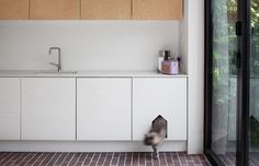 Cat Flap. Image from Dominic McKenzie Architects.