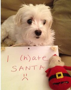 """""""I (h)ate Santa."""" 100 Best Dog Shaming Moments - I don't believe dogs hate anyone. well except my evil neighbors :) Happy Kwanzaa, Funny Animals, Cute Animals, Puppies And Kitties, Doggies, Cute Funny Dogs, Dog Shaming, Smiling Dogs, Happy Fun"""