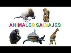 ▶ Aprende los Animales Salvajes - YouTube