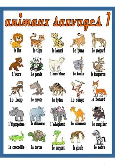 Animaux Sauvages 1    Dictionnaire Visuel   Animau #Animaux #Dictionnaire #sauvages #Visuel French Language Lessons, French Language Learning, French Lessons, Foreign Language, French Flashcards, French Worksheets, French Alphabet, Alphabet Writing, French Teaching Resources