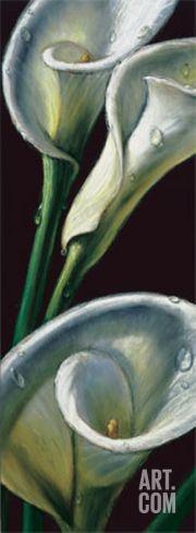 Dewdrop Callas Art Print by Alma'ch at Art.com