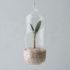 Glass Hanging Oval Terrarium, Large