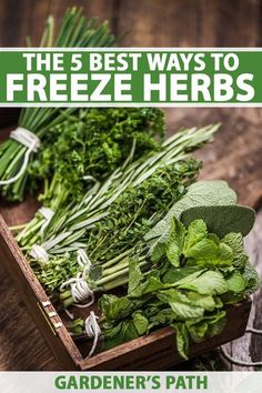 When you have a bountiful herb harvest, or simply can't use that big bunch from the market, freezing is a smart way to preserve their flavor, fragrance, and nutrition. Fast and easy, it also reduces food waste. Learn the best ways to freeze herbs, here on Gardener's Path. #herbgarden #freshherbs #gardenerspath