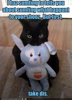 Funny Cat Pictures With Captions | Funny kitty cat pictures, funny cats with captions, funny cat clips ...