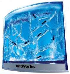 Illuminated Ant Farm