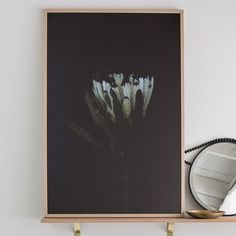 Stacey Weaver Photography has focussed on a still life floral photography with a moody Black light and background. These prints will look gorgeous with a minima Stage For Sale, Dog Clip, Floral Photography, Humble Abode, Looking Gorgeous, Still Life, Wall Art, Frame, Prints