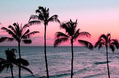 pink sunset with palm trees Photos Bff, Beach Photos, Palm Trees Tumblr, Sunset Tumblr, The Wicked The Divine, Photo Summer, Summer Photos, Palm Tree Sunset, The Beach