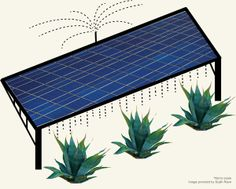 """Win-win situation: Growing crops on photovoltaic farms - Stanford researchers posit that in arid regions, co-locating solar and agriculture ideal in arid SW.  """"On a co-located solar farm, runoff from water used to clean photovoltaic panels would nourish agave or other biofuel crops. The plants would in turn provide ground cover, helping prevent dust buildup that decreases solar panel efficiency."""""""