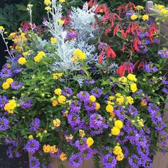composition jardinière été de fleurs en jaune, violet et rouge