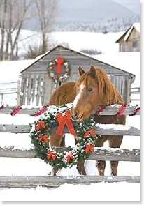 country Christmas Love this Merry Christmas, Christmas Horses, Christmas Scenes, Christmas Love, Country Christmas, Christmas Pictures, Winter Christmas, All Things Christmas, Vintage Christmas
