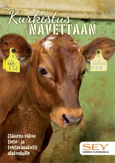 Open reissari: ekaluokka Geography, Cow, Animals, Animales, Animaux, Cattle, Animal, Animais