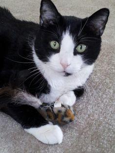 Manny the tuxedo cat