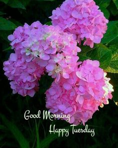 Good Morning Tuesday Images, Happy Tuesday Pictures, Happy Tuesday Morning, Good Morning Nature, Good Morning Images Flowers, Good Morning Cards, Good Morning Happy, Good Morning Photos, Good Morning Greetings