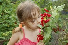 Special Needs Gardening: Creating A Special Needs Garden For Children - Gardening with special needs children is a very rewarding experience. It reduces stress and helps children cope with anxiety and frustration. Learn more about gardening with special needs children here.