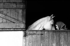 STABLE LOVE | SAM HASKINS | ESTATE PRINT