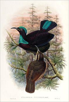 Birds of paradise 9