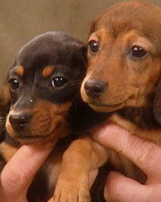 Puppy Training, The Martha Stewart Show