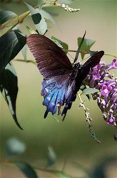 Splendor | Flickr - Photo Sharing!