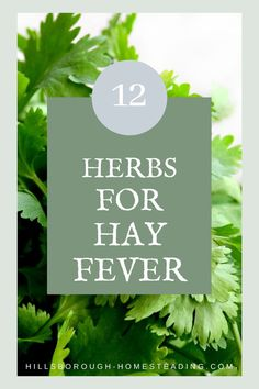 Allergies and hay fever suck! I've collected the ultimate guide to tips and tricks to reduce your symptoms and 12 herbs you can use to treat your running nose and watery eyes! | Hillsborough Homesteading  #herbs #herbal #naturalhealing #herbalremedies Natural Remedies For Allergies, Allergy Remedies, Herbal Remedies, Indoor Gardening Supplies, Herb Gardening, Healty Dinner, Herb Garden Design, Watery Eyes, Herbs For Health