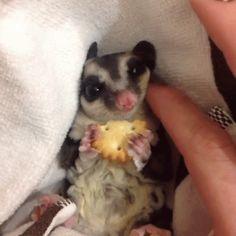 gifs animés écureuils