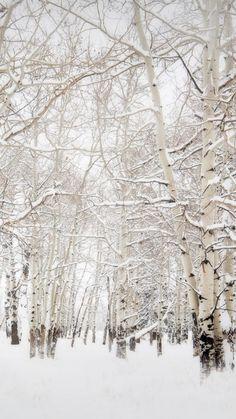 Birch-Trees-Winter-Landscape-iPhone-6-Plus-HD-Wallpaper. More