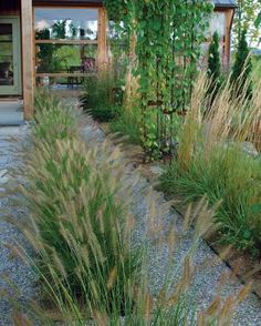 Line up grasses to reinforce a linear design. A long, low row of fountain grasses ( Pennisetum alopecuroides 'Hameln') along a pathway leads the eye toward an entrance.  Read more: http://www.finegardening.com/designing-grasses#ixzz3nYOo3rJf  Follow us: @finegardening on Twitter   FineGardeningMagazine on Facebook