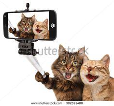 【ねこ 貓 CAT】 Funny cats - Self picture. Selfie stick in his hand. Couple of cat taking a selfie together with smartphone camera - stock photo Selfie Gato, Funny Selfie, Self Pictures, Funny Cat Pictures, Pictures Images, Self Foto, Funny Shit, Funny Dogs, Funny Animals