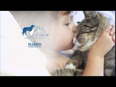 Pets at Peace by Harris Funeral Home - YouTube Funeral, Peace, Youtube, Animals, Animaux, Animal, Animales, Sobriety, Youtubers