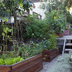 Foodies backyard: DIY ideas