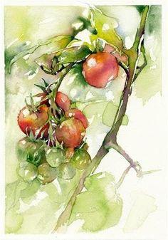 Tomato Study #1: Solanum lycopersicum