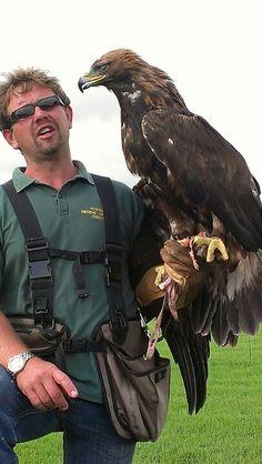 Wow Bald Eagle, Bird, Photography, Animals, Photograph, Animales, Animaux, Birds, Fotografie