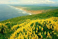 Califórnia, paisagem, natureza, natureza, Oceano Vetor