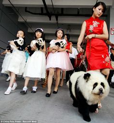 Dogs that want to be as cool as pandas. Or people that want pandas as pets but can't have them.