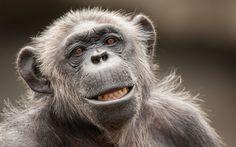 monkey-face-hd-2K-wallpaper.jpg (2560×1600)