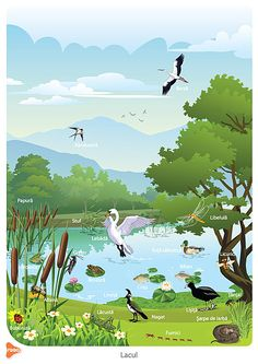 Teaching Methods, Golf Courses, Birds, Children, Nature, Travel, Bebe, Biology, Young Children