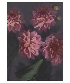 Flora Limited Edition Art Print