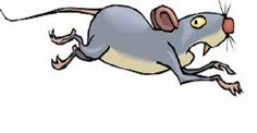 Inspirational Stories: Mouse In The House