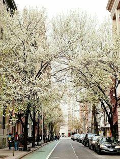 A ruazinha mais bela