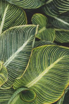by René Jordaan Photography on Creative Marke. Closeup by René Jordaan Photography on Creative Marke. - -Closeup by René Jordaan Photography on Creative Marke. Leaf Photography, Texture Photography, Plant Painting, Plant Drawing, Tropical Leaves, Tropical Plants, Tropical Art, Tropical Vibes, Plant Texture