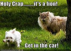 Holy Crap.........its a lion! Get in the car!