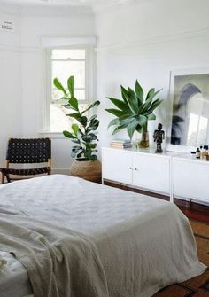 Plants and sideboard