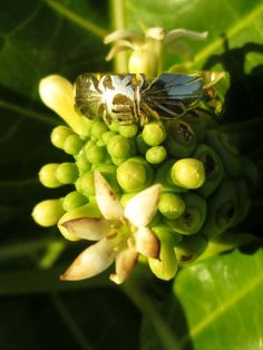 Honey Bee Ring  Hand Carved by SignatureRings on Etsy