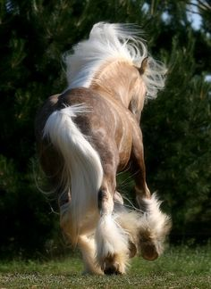Flowing #horse #mane and tail  www.harusemi.tumblr.com/post/37081051884/ahorseisnotahorse-beautiful-absolutely