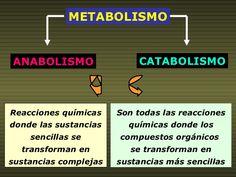 Las Mejores 11 Ideas De Anabolismo Anabolismo Clase De Biología Biología Celular