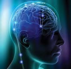 Resultado de imagen para plantillas de cerebro