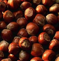 Barcelona Filbert Hazelnut  The most-planted European filbert in America! This popular tree is a favorite among home growers, and it's the nut of choice for commercial growers. Produces big, bumper crops of delicious and flavorful nuts, season after season. Easy to train to tree or shrub form. Bears in 7-10 years. Matures to be 15-18' tall. Ripens in late summer. Grafted. Best pollinator: Casina Filbert/Hazelnut. Available for spring shipping only, so order now!